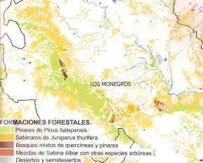 Formaciones forestales