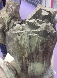 sabina fosil