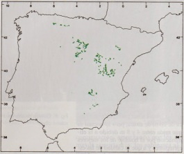 Resultado de imagen de phoenicea thurifera