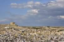 Castejón de Monegros (3)