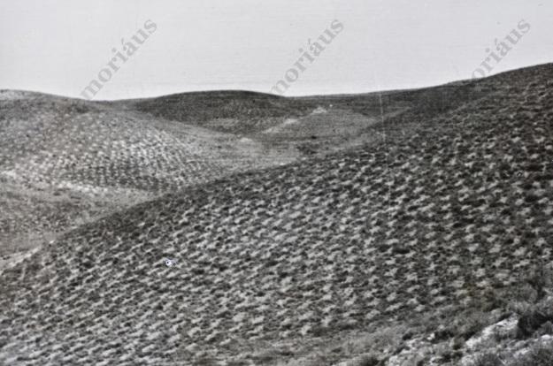 La Sarda 1947 2